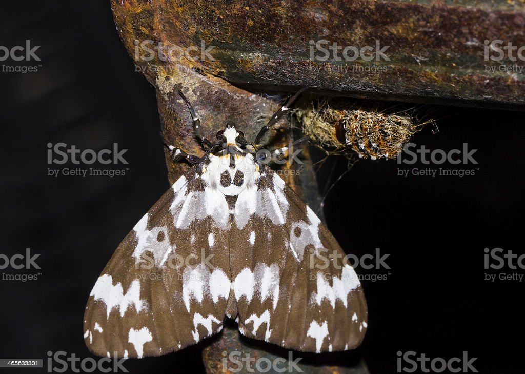 Baby Moth stock photo