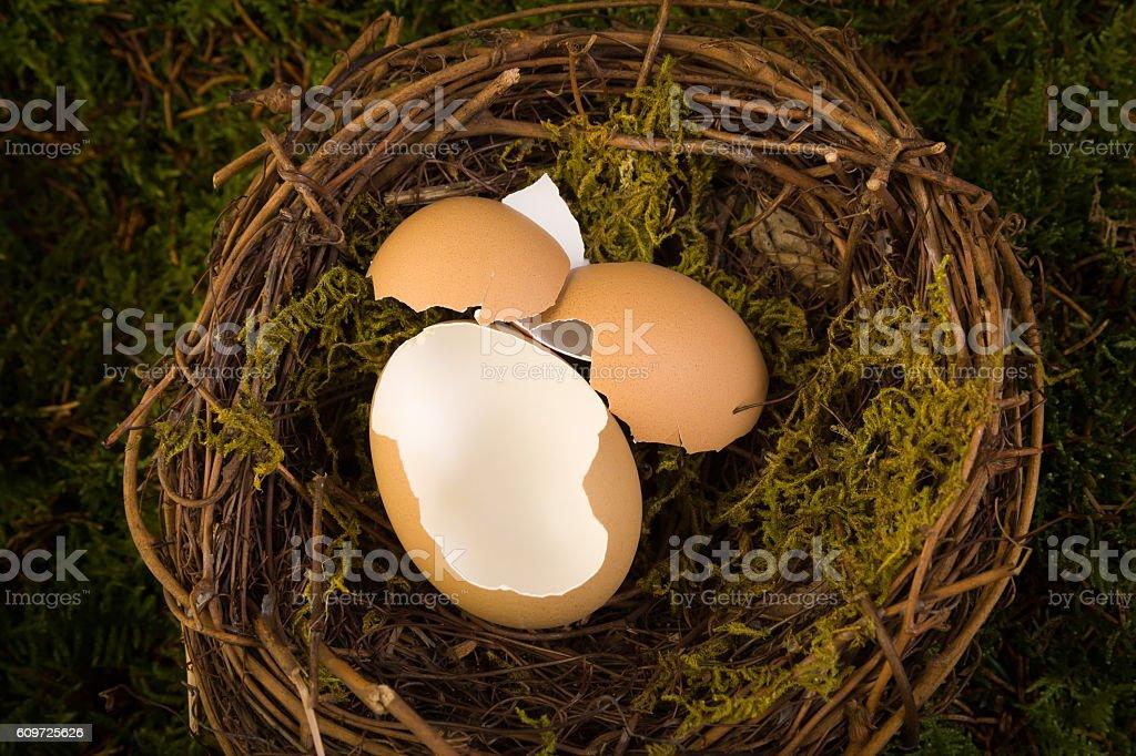 Baby nest digital backdrop stock photo