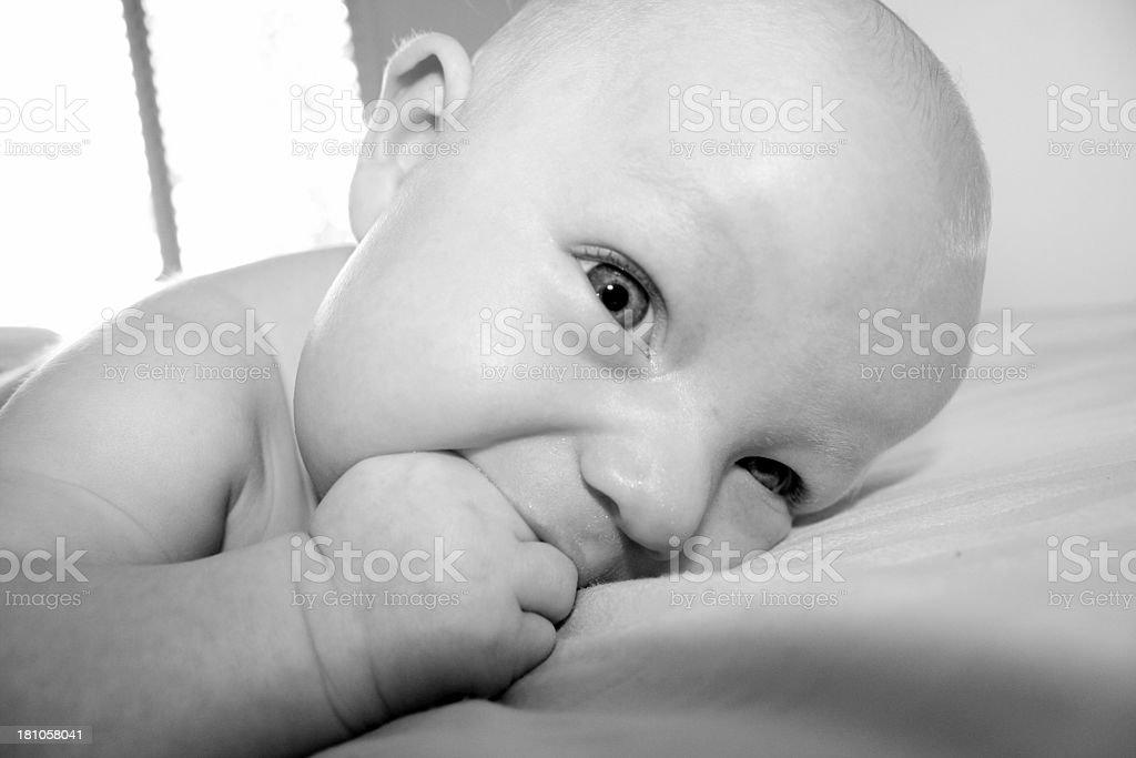 Baby Nibble royalty-free stock photo
