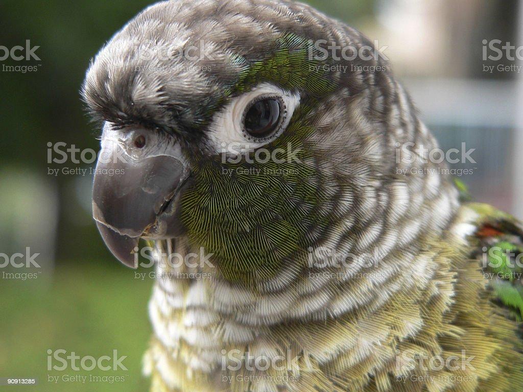 Baby parrot 2 stock photo