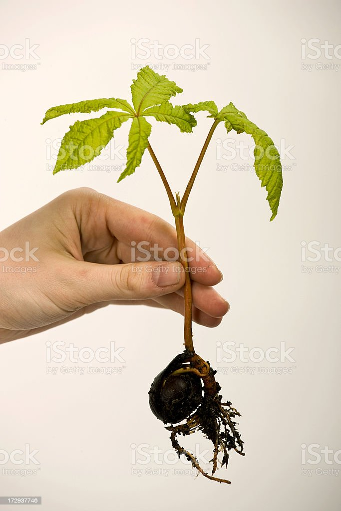 Baby  Plant in a Hand royalty-free stock photo