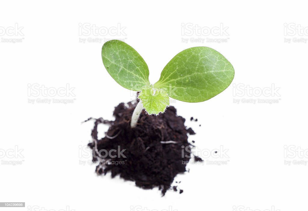 Baby Plant royalty-free stock photo