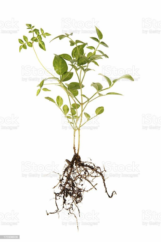 Baby plant stock photo
