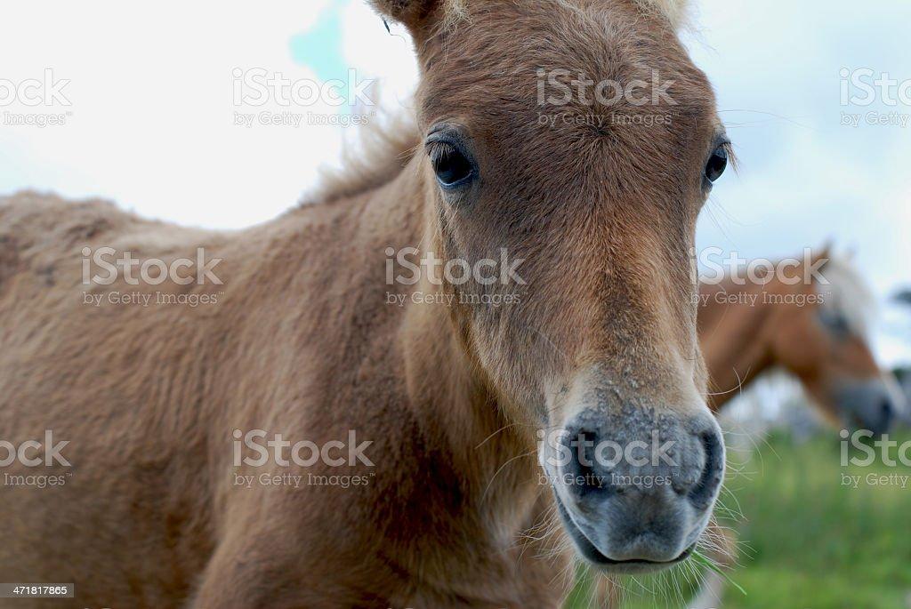 Baby Pony stock photo