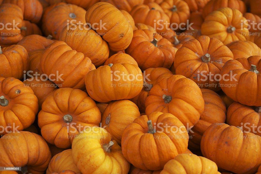Baby Pumpkins stock photo