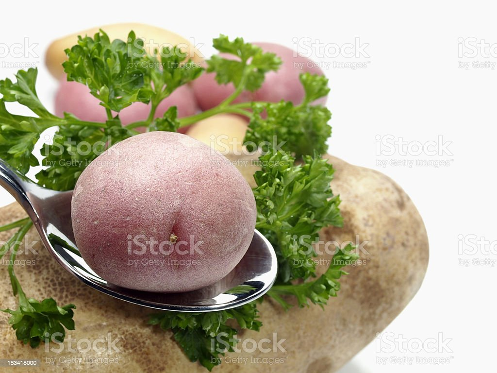 Baby Red Potato on Spoon stock photo