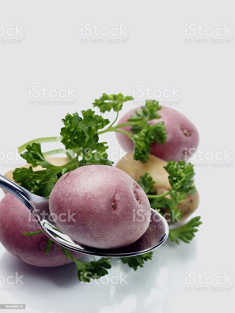 Baby Red Potato on Spoon stock photo