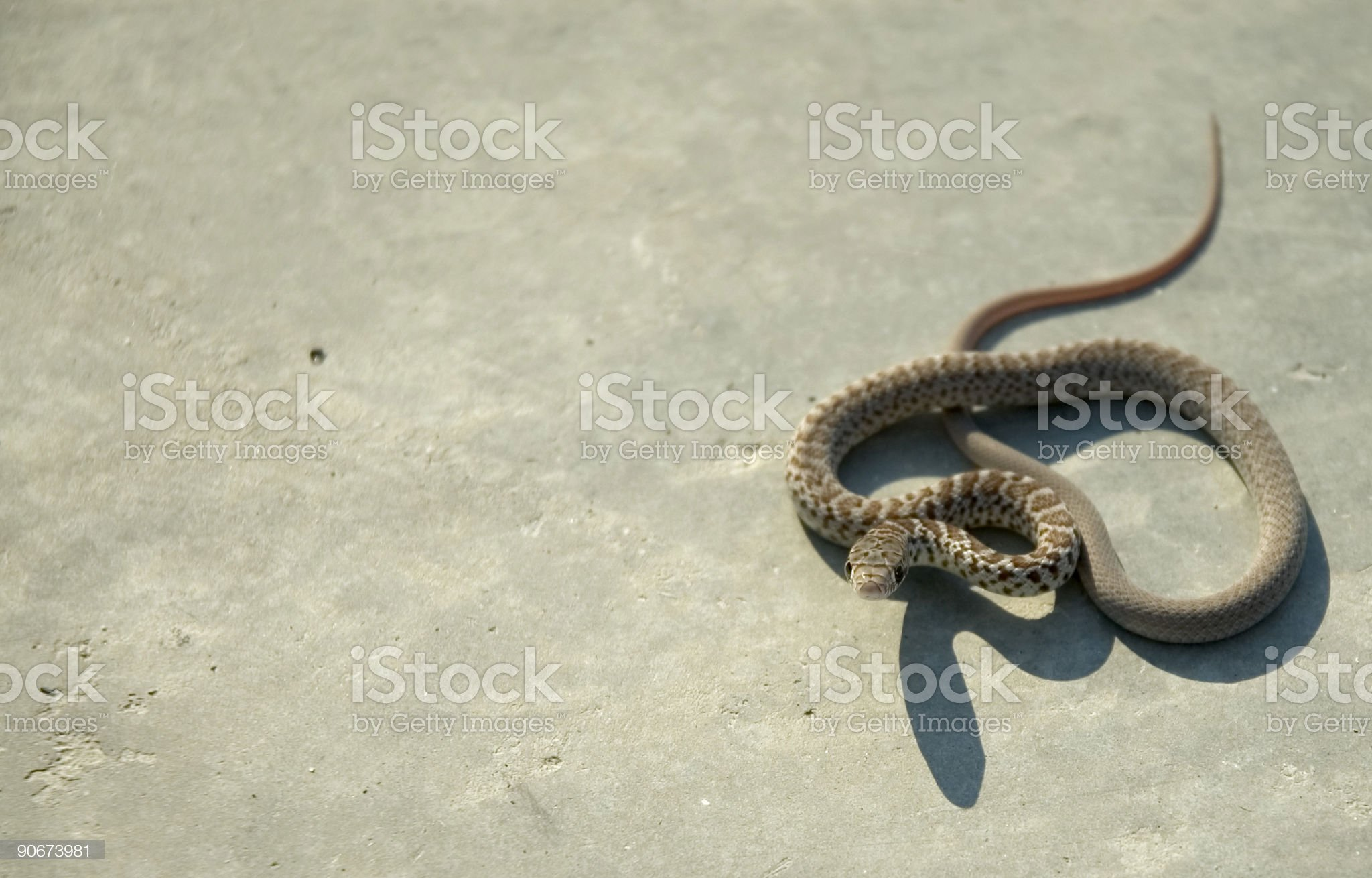 Baby Snake 1 royalty-free stock photo