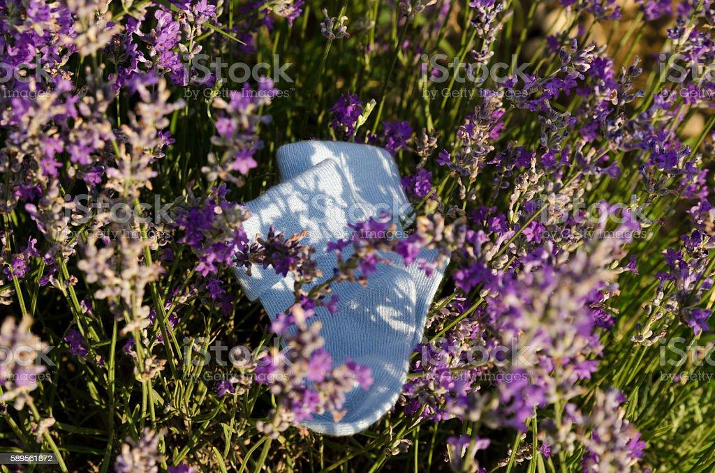 Baby socks in lavender field stock photo