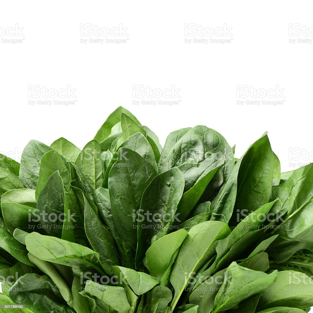 baby spinach leaves stock photo