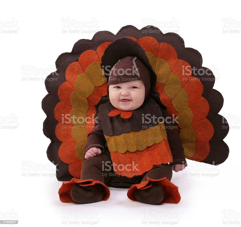 baby turkey stock photo