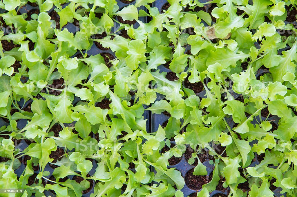 Baby Vegetables ,Potted seedlings growing in peat moss pots royalty-free stock photo