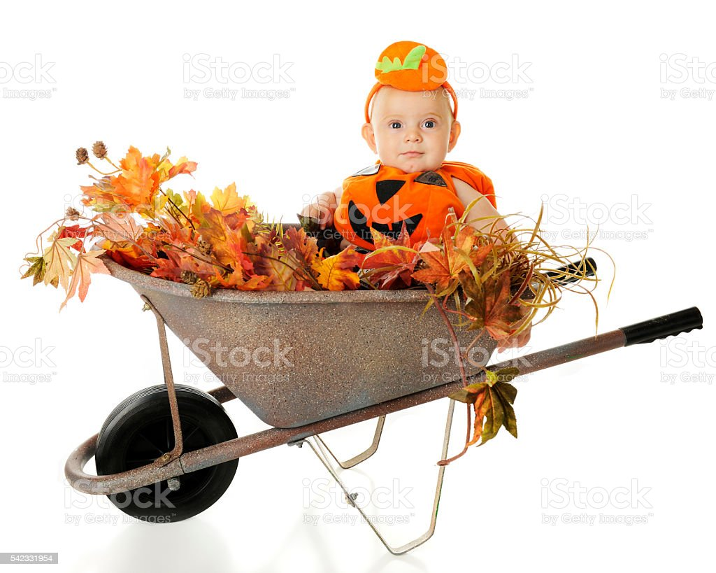 Baby Wheelbarrow Pumkin stock photo