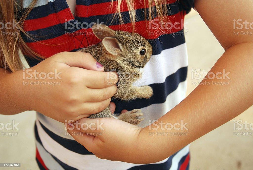 Baby Wild Bunny royalty-free stock photo