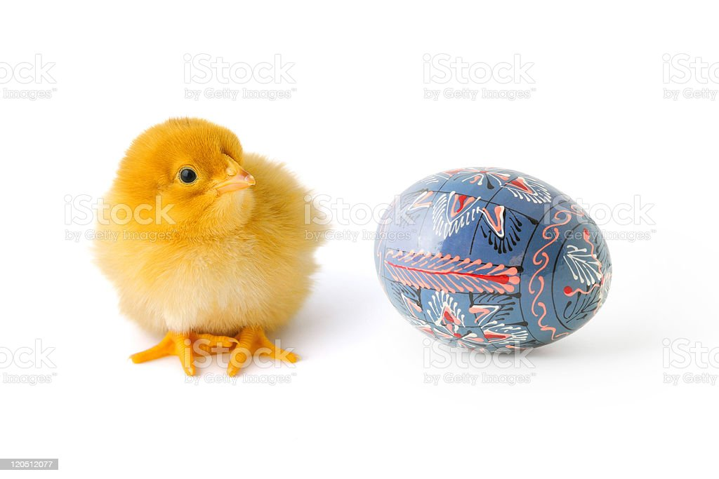 Baby-chicken and Easter egg stock photo
