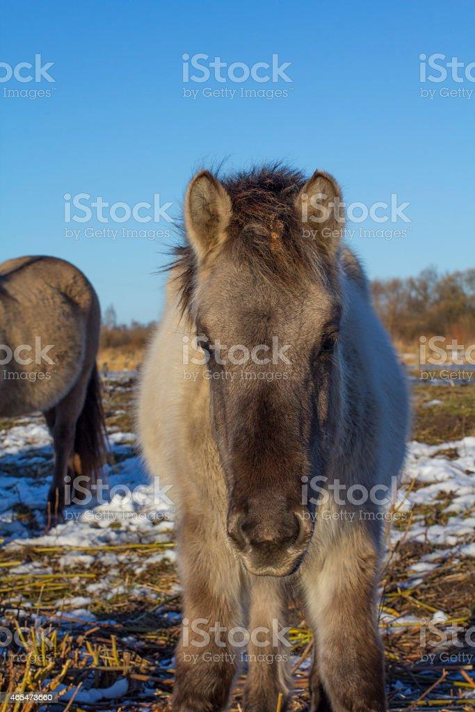 Babyhorse stock photo