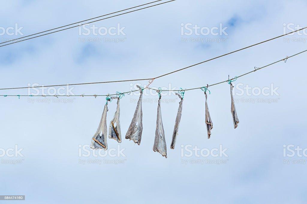 bacalaos cologados pasa secarlos stock photo