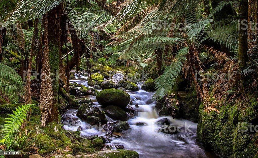 Bachlauf im Regenwald Tasmaniens stock photo