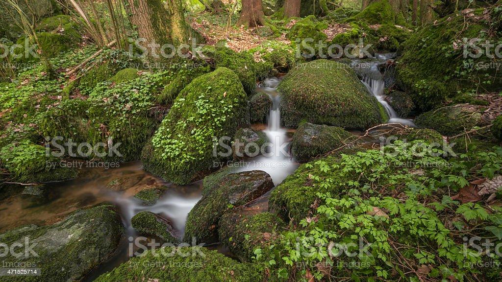 Bachlauf im Schwarzwald photo libre de droits
