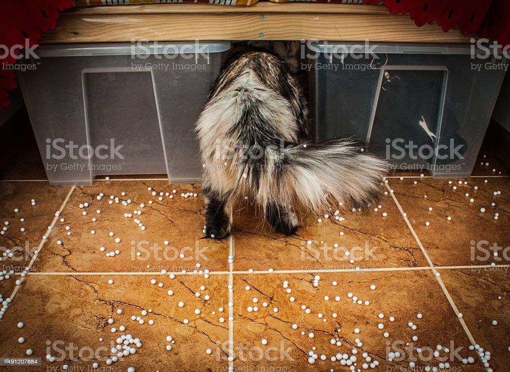Arrière d'un chat photo libre de droits