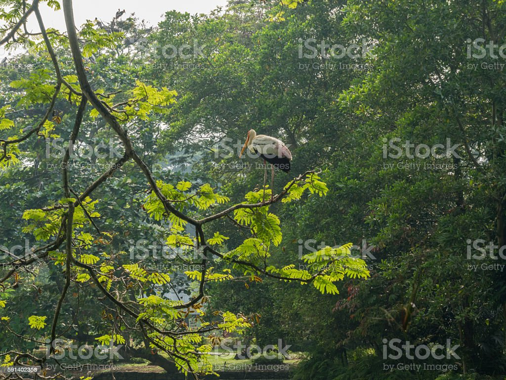 Back of a yellow-billed stork stock photo