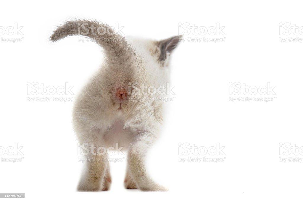 back of  kitten stock photo