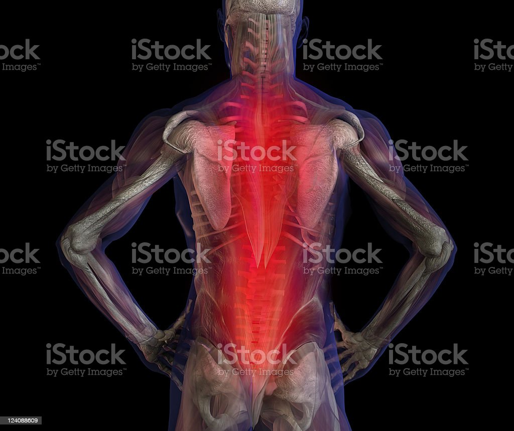 Back pain. 3D illustration of human male anatomy and skeleton. royalty-free stock photo