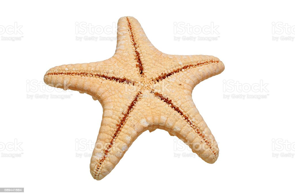 Back side of starfish isolated on white background stock photo