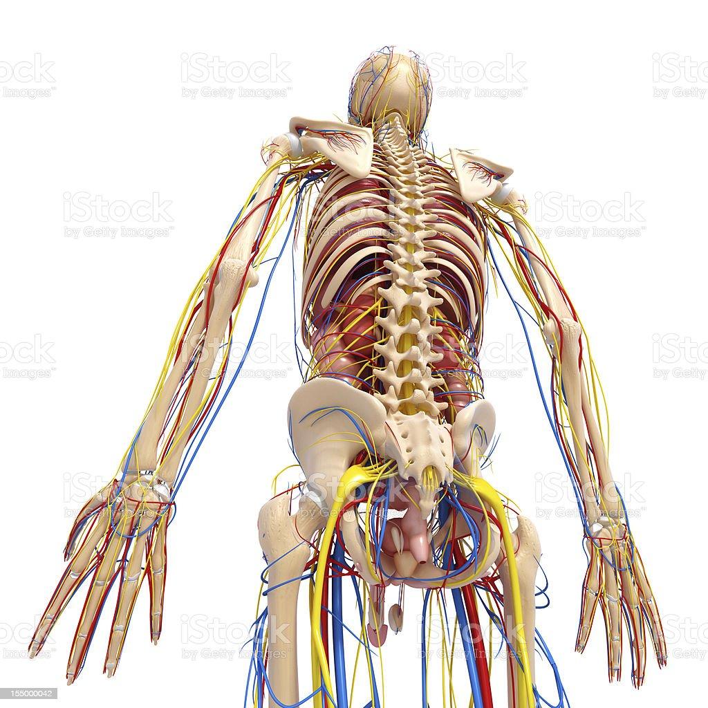 Image result for नर्वस सिस्टम का फोटो