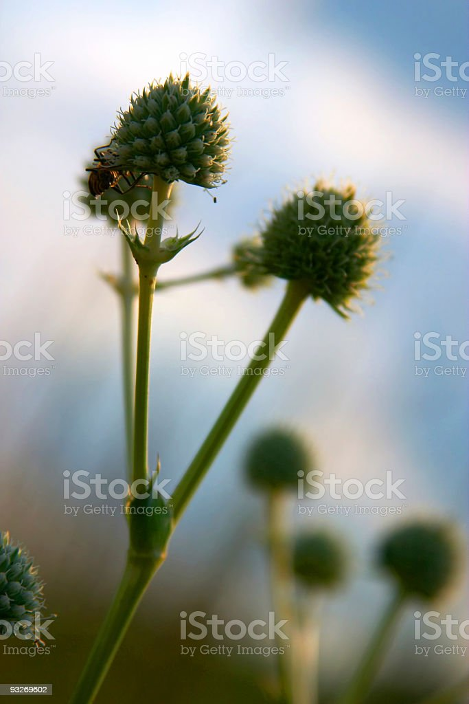 Back To Nature royalty-free stock photo