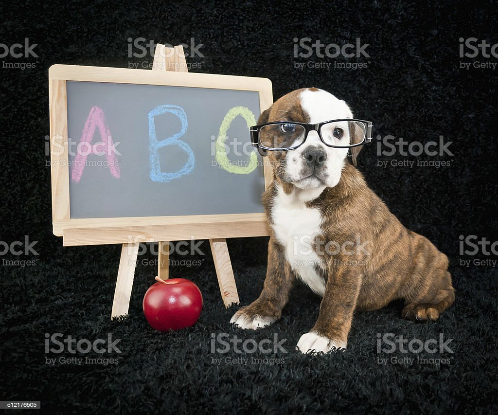 Back To School Puppy stock photo