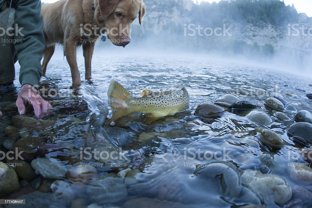 Back To The River royalty-free stock photo