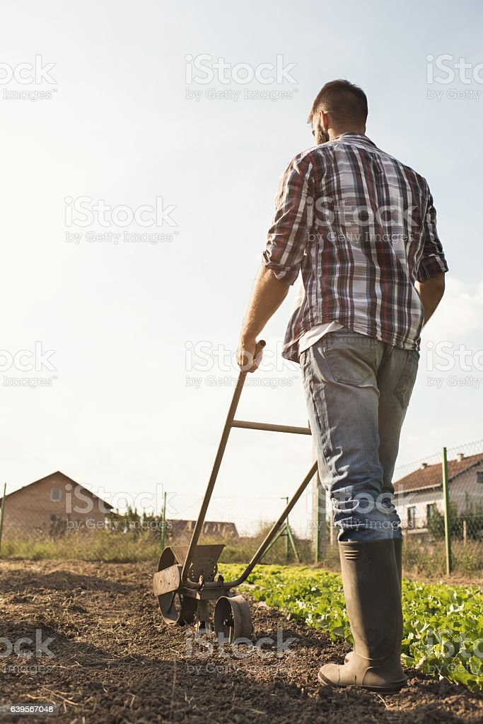 Back view of farmer using old-fashioned seeder on a field. stock photo