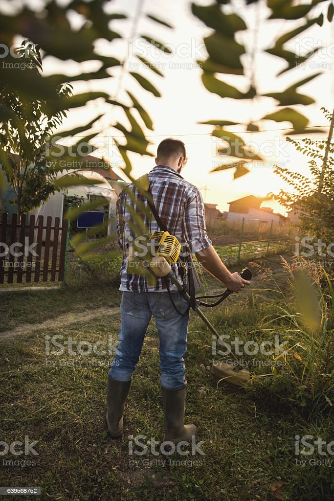 Back view of worker mowing the lawn with weed trimmer. stock photo