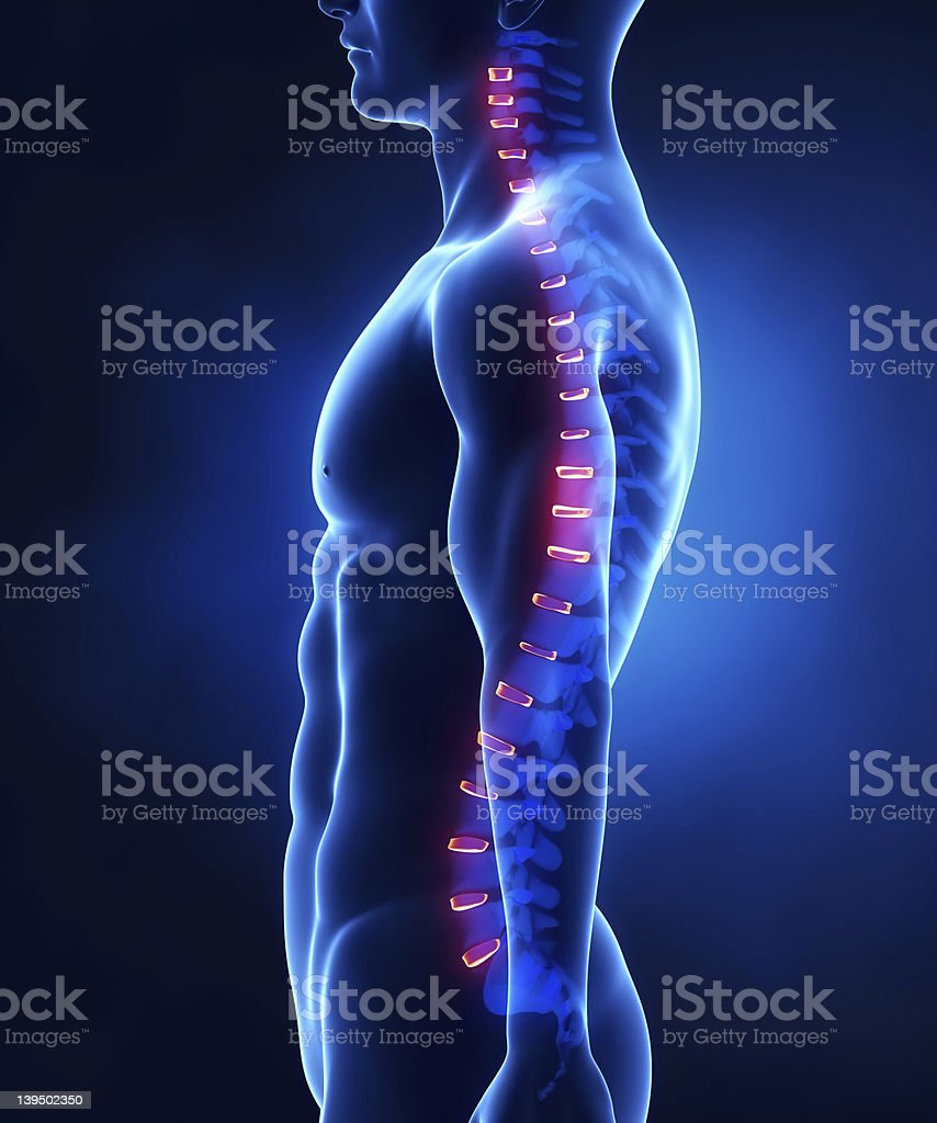 Backbone intervertebral disc anatomy lateral view royalty-free stock photo