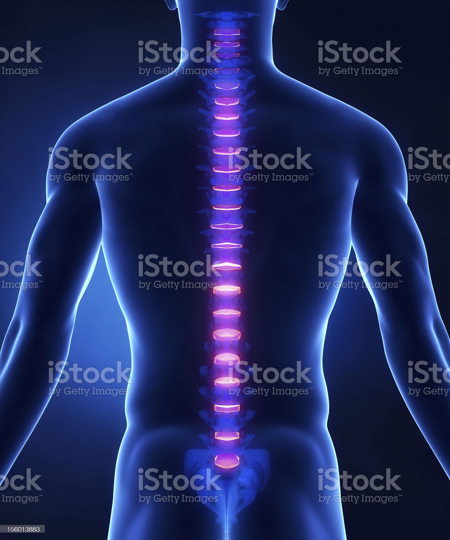 Backbone intervertebral disc anatomy posterior view royalty-free stock photo