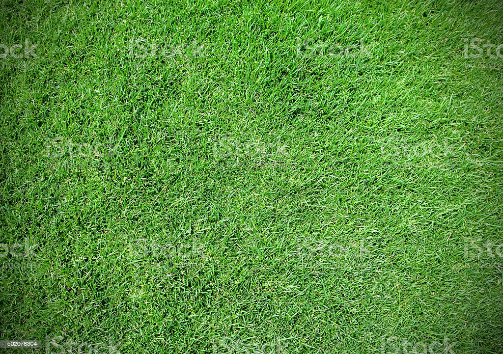 Background and texture of Beautiful green grass pattern from gol stock photo