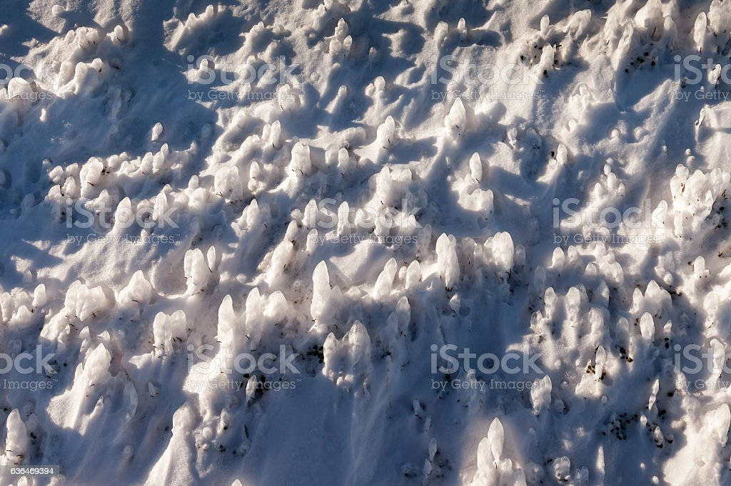Background and texture of snow. stock photo