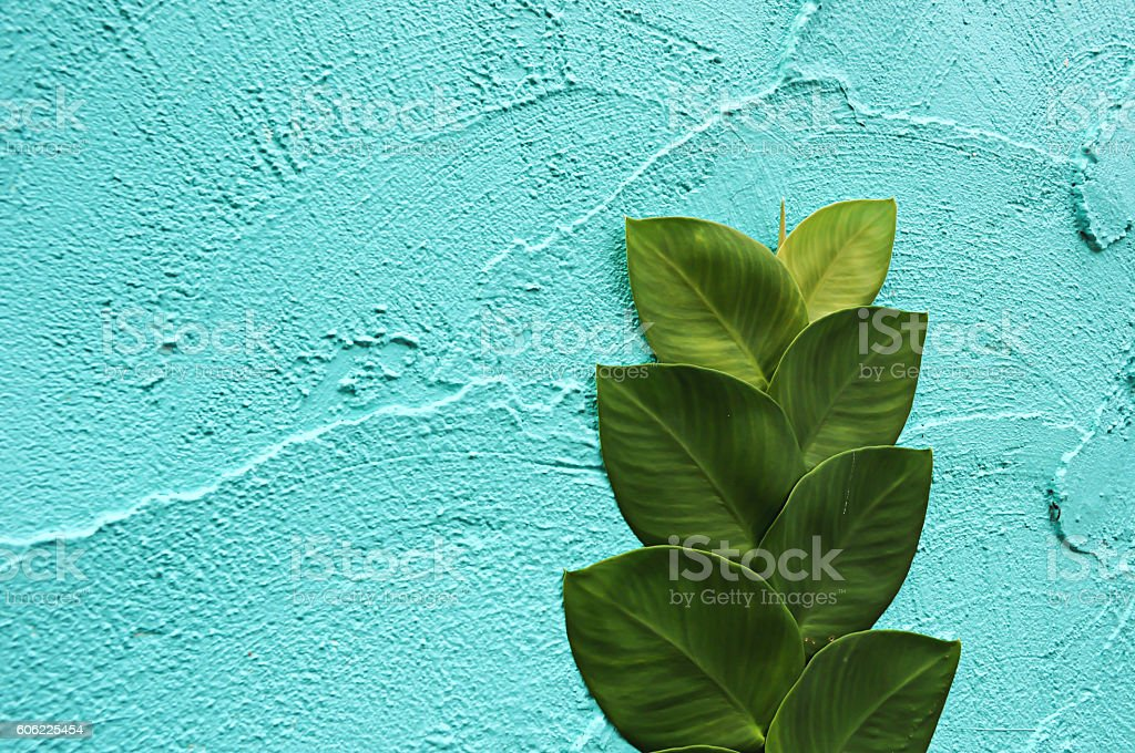 Background Blue wall with Plant. For work to you. stock photo