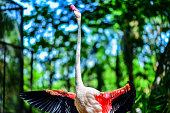 Background blur and sofe focus Flamingo raised in Thailand zoo.F