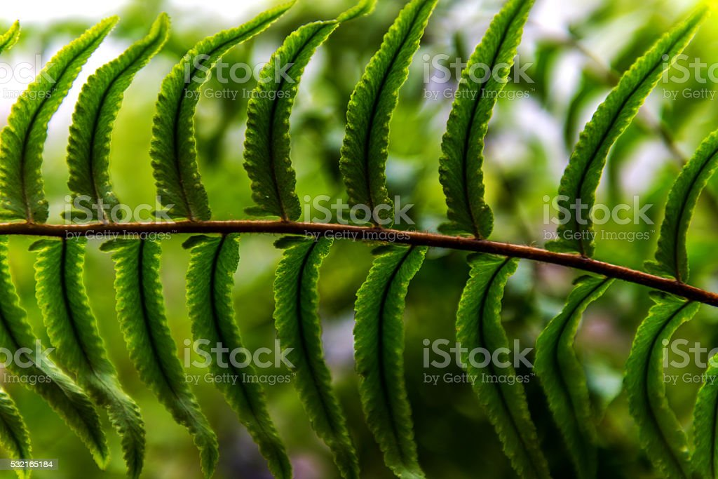 Background blur Fern. stock photo