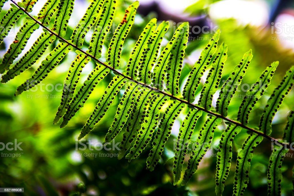 Background blur Fern. stock photo
