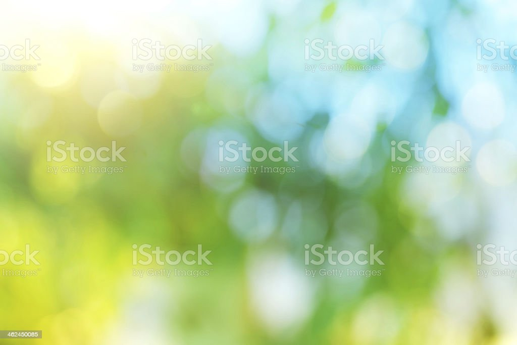 Background blur of nature in spring. stock photo