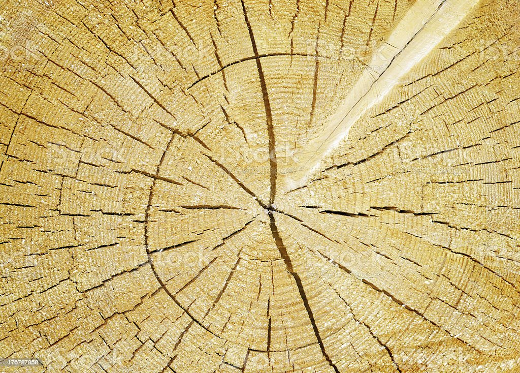 Background cut of tree trunk stock photo