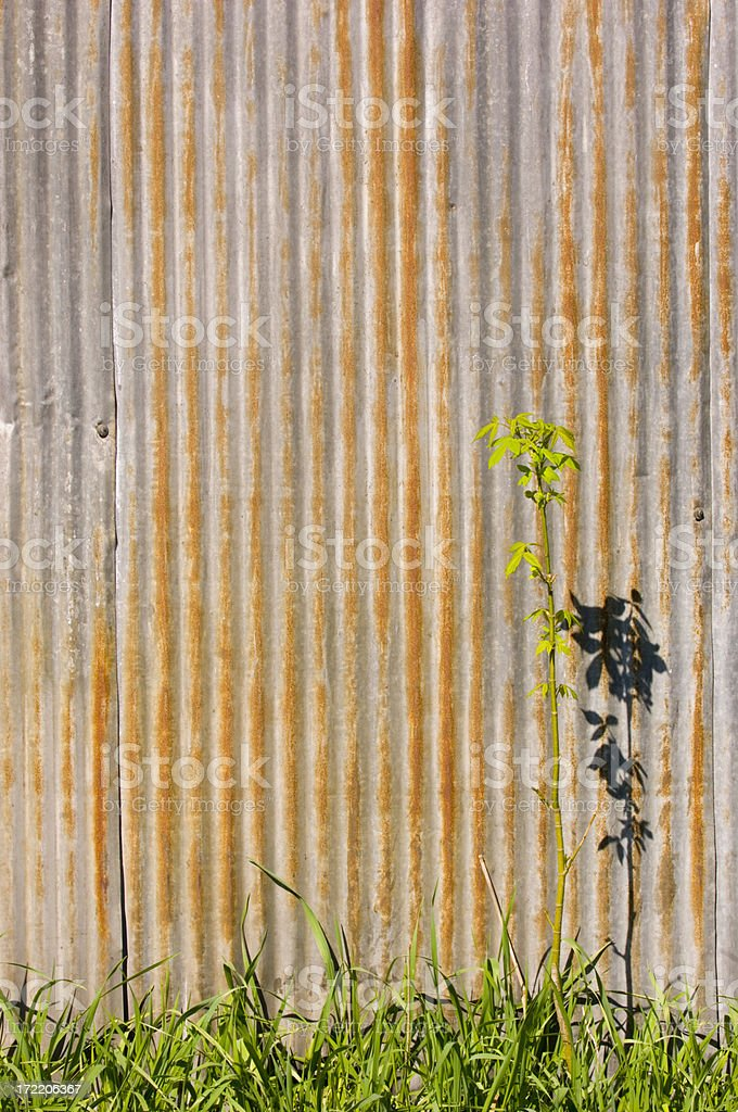 Background Element - Corrugated Metal royalty-free stock photo