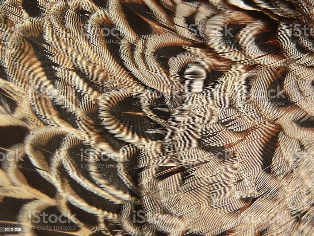 Background - Feathers II royalty-free stock photo