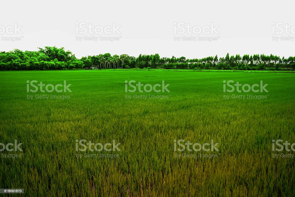Background fields, meadows colorful. stock photo