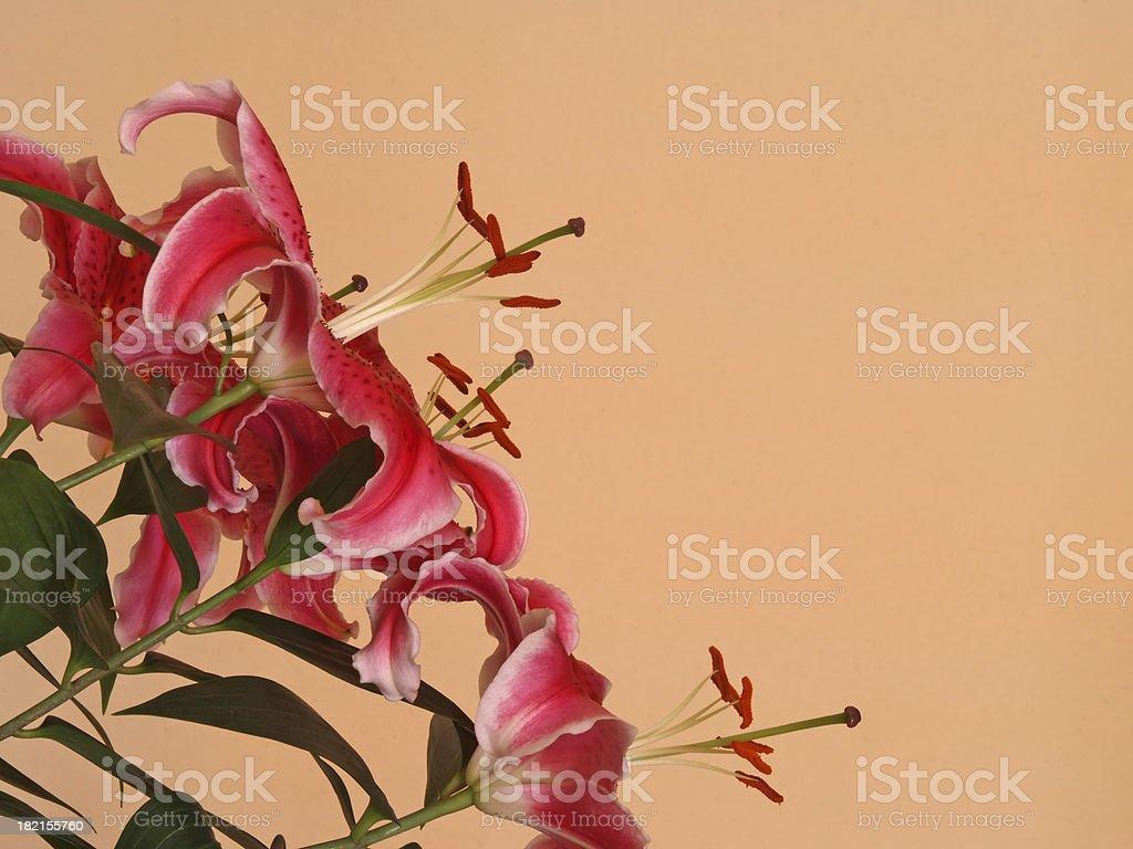 Background. Flowers stock photo