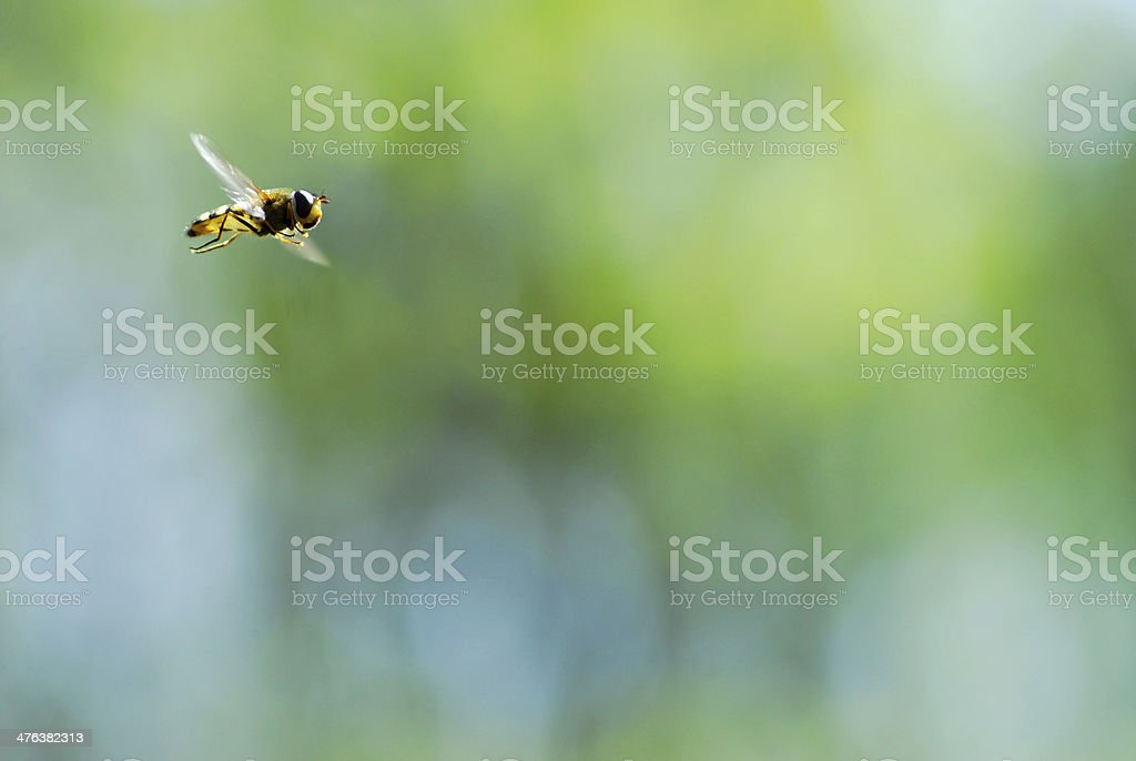 Background fly in flight royalty-free stock photo