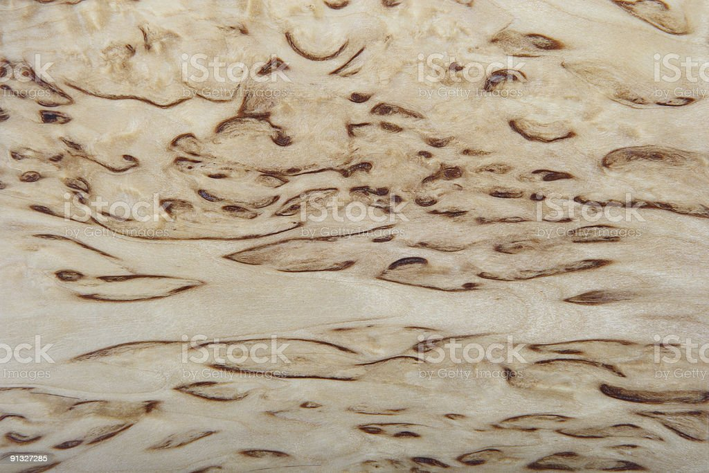 Background from a birch royalty-free stock photo